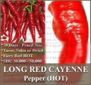 1 oz (5,000+) RED CAYENNE SLIM HOT Pepper seeds noodle pizzas hot sauces chili tacos salsa