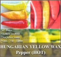 1 oz (4,000+) HUNGARIAN WAX HOT Pepper seeds YELLOW TO RED dwarf and bushy and approx. 15