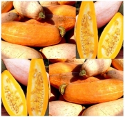 5 PINK BANANA SQUASH SEEDS HUGE 75 LBs excellent, dry, firm yellow-orange center