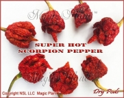 Trinidad Scorpion Chili Peppers - 6 Dried Pods - The Hottest Chili Pepper in the World with an Amazing Flavor-100% Satisfaction Guaranteed!!!