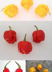 ***New World Record Pepper Collection*** (Moruga's + Reaper's) Original Only Sell By Samenchilishop(world)