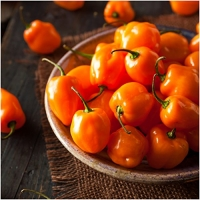 Package of 100 Seeds, Orange Habanero Pepper (Capsicum chinense) Non-GMO Seeds by Seed Needs
