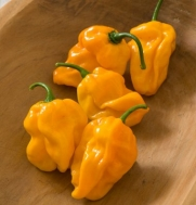 Pepper Numex Suave Orange D3024A (Yellow Orange) 25 Organic Seeds By David's Garden Seeds