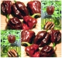 30 HABENERO HABANERO CHOCOLATE HOT Pepper seeds 2 x 1 ~ Originating from Cuba