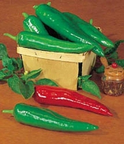 Pepper HOT Anaheim Chili Great Heirloom Vegetable 200 Seeds