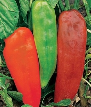 Burpee Sweet Pepper Corno Di Toro 51913 (Green to Red) 25 Seeds