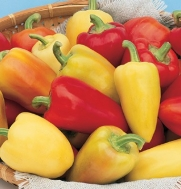 Pepper Antohi Romanian D595A (Yellow to Red Sweet) 25 Organic Heirloom Seeds by David's Garden Seeds