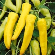 Pepper Yellow Banana DGS0128 (Yellow) 100 Heirloom Seeds by David's Garden Seeds